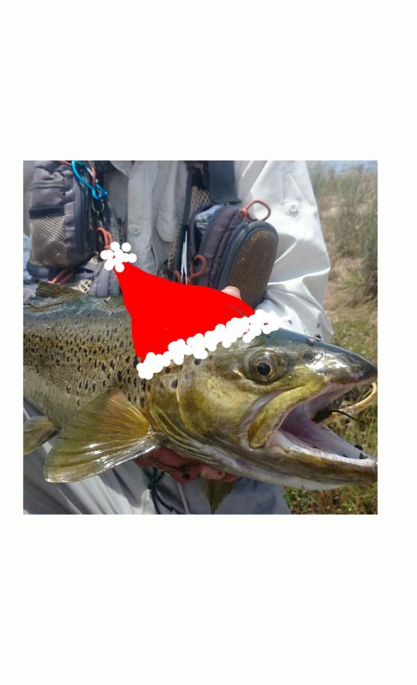 xmas trout